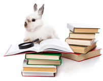 A cute rabbit is reading a book with a loupe Royalty Free Stock Photos