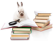 A cute rabbit is reading a book with a loupe Stock Images