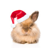 Cute rabbit in red christmas hat. isolated on white background Stock Photography