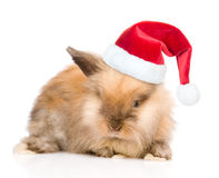Cute rabbit in red santa hat. isolated on white background Stock Photography