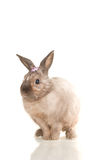 Cute rabbit sit on white with flowers Stock Photography