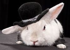 Cute rabbit in top hat and bow-ti Stock Image