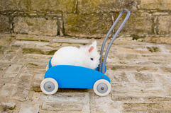 Cute rabbit in the trolley Royalty Free Stock Photography