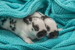 Cute rabbits babies. In a bed Stock Photos
