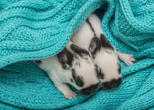 Cute rabbits babies. In a bed Royalty Free Stock Photo