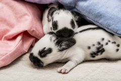 Cute rabbits babies. In a bed Stock Photography