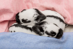 Cute rabbits babies. Sleeping in a bed Stock Photo
