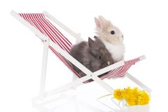 Cute rabbits in a deck chair Royalty Free Stock Photo