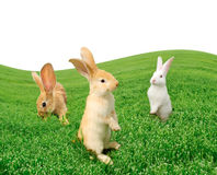 Cute Rabbits in the Field Royalty Free Stock Photos