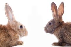 Cute rabbits Royalty Free Stock Photo