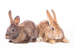 Cute rabbits Stock Photos