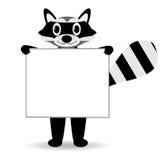 Cute raccoon Stock Photo