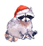 Cute raccoon animal in red santa`s hat. Christmas Watercolor Stock Photos
