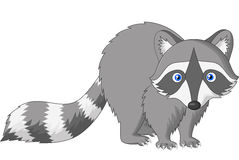 Cute raccoon cartoon vector illustration
