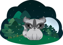 Cute raccoon. In a forest in the night Stock Photography