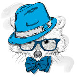 Cute raccoon with hat and sunglasses . Animal clothing. Stock Image