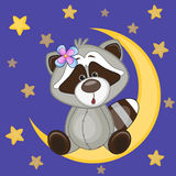 Cute Raccoon on the moon Stock Images