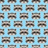 Cute raccoon Stock Photography