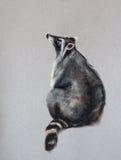 Cute raccoon Royalty Free Stock Photos