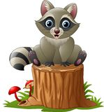 Cute raccoon on the tree log Stock Image