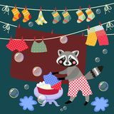 Cute raccoon washes clothes. Stock Image