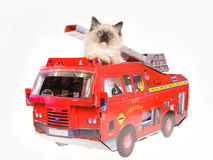 Cute Ragdoll kitten in red fire truck on white bg Royalty Free Stock Image