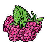Cute raspberries. Royalty Free Stock Photo