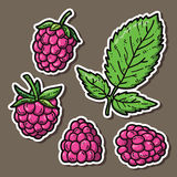 Cute raspberries. Royalty Free Stock Images