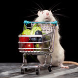 Cute rat with a shopping cart Royalty Free Stock Image