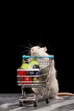 Cute rat with a shopping cart Stock Photo