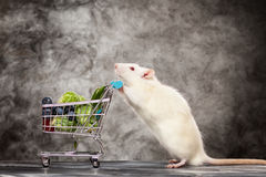 Cute rat with a shopping cart Royalty Free Stock Photos