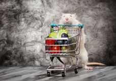 Cute rat with a shopping cart Stock Photography