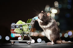 Cute rat with a shopping cart Royalty Free Stock Photo