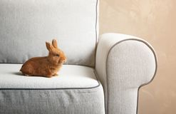 Cute red bunny sitting royalty free stock photo
