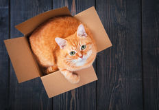 Cute red cat in a cardboard box. Stock Photography