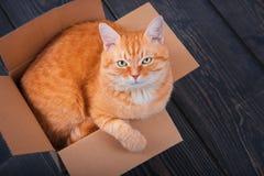 Cute red cat in a cardboard box. Stock Photo