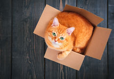 Cute red cat in a cardboard box. Cute red cat in a cardboard box on a background of wooden planks close up Stock Photography