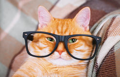 Cute red cat with glasses close-up. Royalty Free Stock Photo