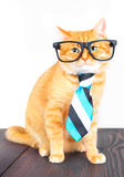 Cute red cat with glasses and a tie sitting on a table. Stock Photo