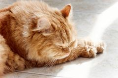 Cute red cat sleeping in the sun. Close up Ginger cat. Cute red cat sleeping in the sun.  Close up Ginger cat. Selective focus Stock Images