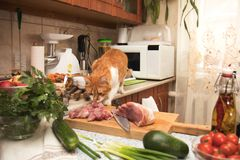 Cute red cat stealing meat from the kitchen table. Small cozy ki. Tchen with household appliances. Cozy home concept Royalty Free Stock Image