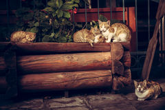 Cute red cats family with kitten resting on wooden logs in rural countryside village in vintage rustic style Stock Images