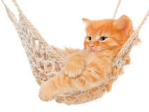 Cute red-haired kitten in hammock Stock Photography