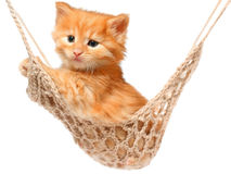 Cute red-haired kitten in hammock Royalty Free Stock Image