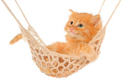 Cute red-haired kitten lying in hammock. Stock Photo