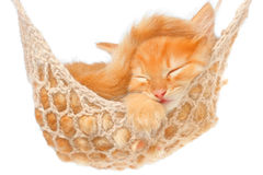 Cute red haired kitten sleeping in hammock Stock Photos