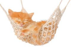 Cute red haired kitten sleeping in hammock Royalty Free Stock Image