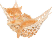Cute red haired kitten sleeping in hammock Royalty Free Stock Photos