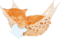 Cute red haired kitten sleeping with open book in hammock