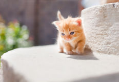 Cute red kitten Stock Photos